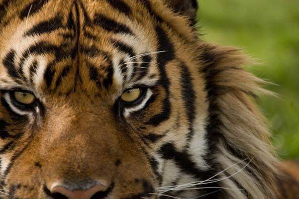 Sri Lanka Zoo