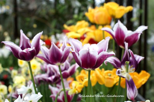 The Royal Botanical Gardens of Peradeniya
