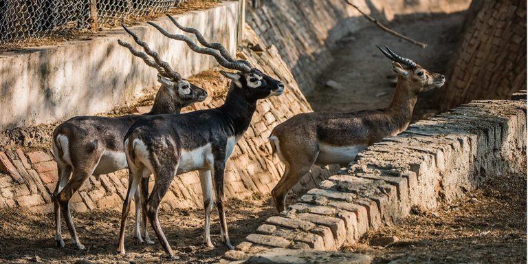 Dehiwala Zoo- Colombo